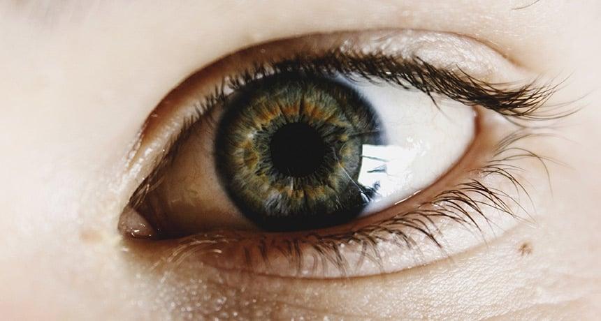 eye lens stem cells
