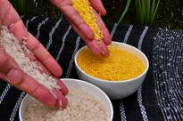 Biofortified Rice