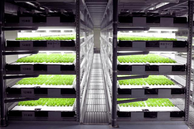 japan indoor farm