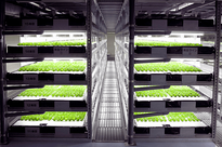 japan indoor farm