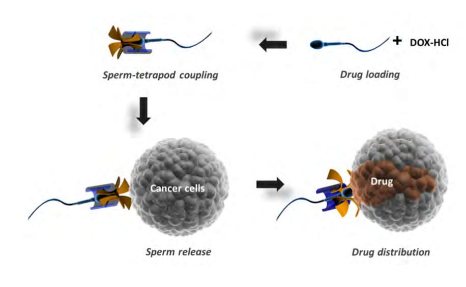 sperm-drive.png