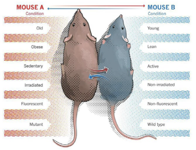 Mouse A and Mouse B