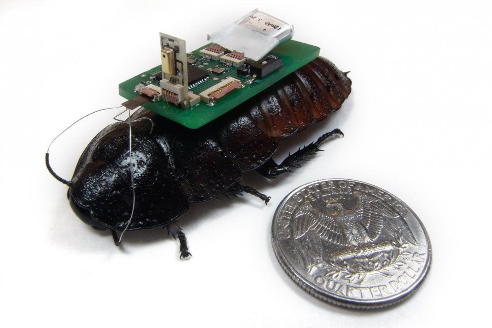 cyborg cockroaches