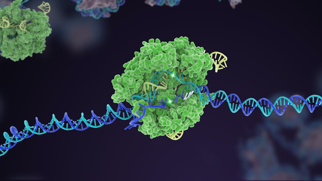 crispr cas9 genome editing dna