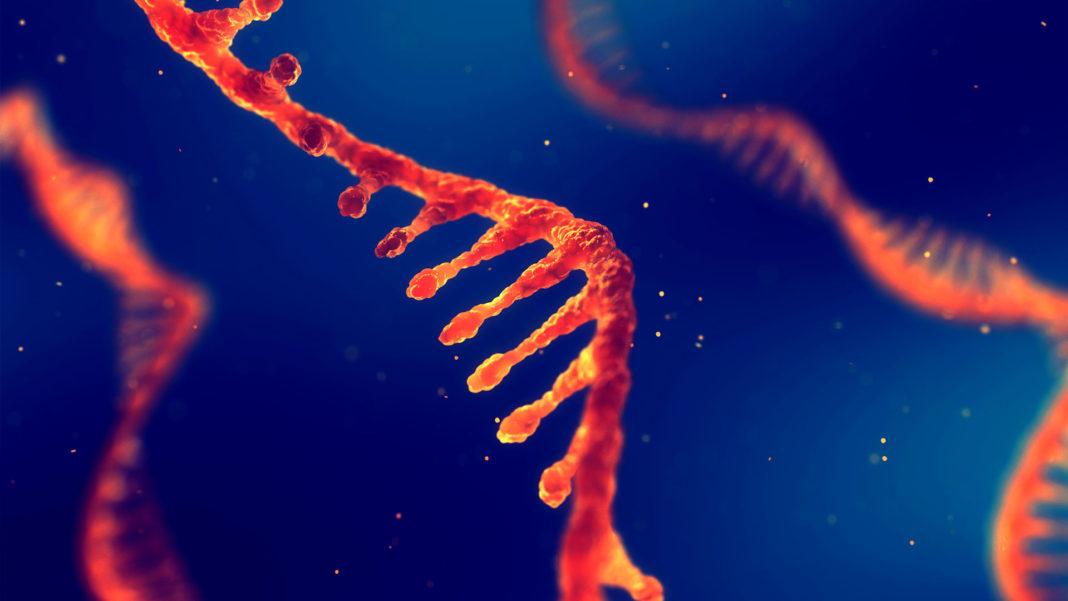 single strand ribonucleic acid rna